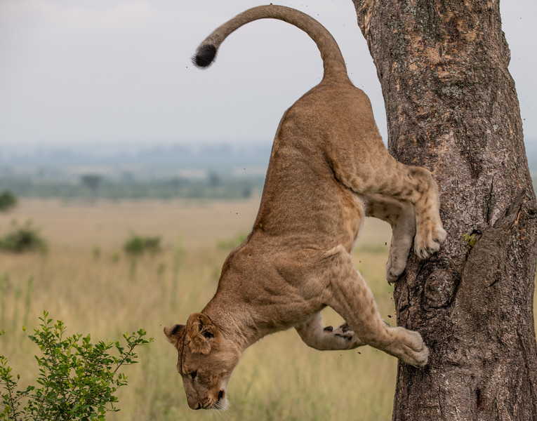 Uganda_T_QE-1276.jpg