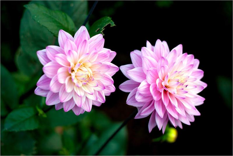 20111015_Flower18.jpg
