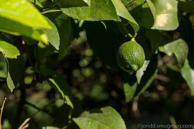 Argenti Lemon
