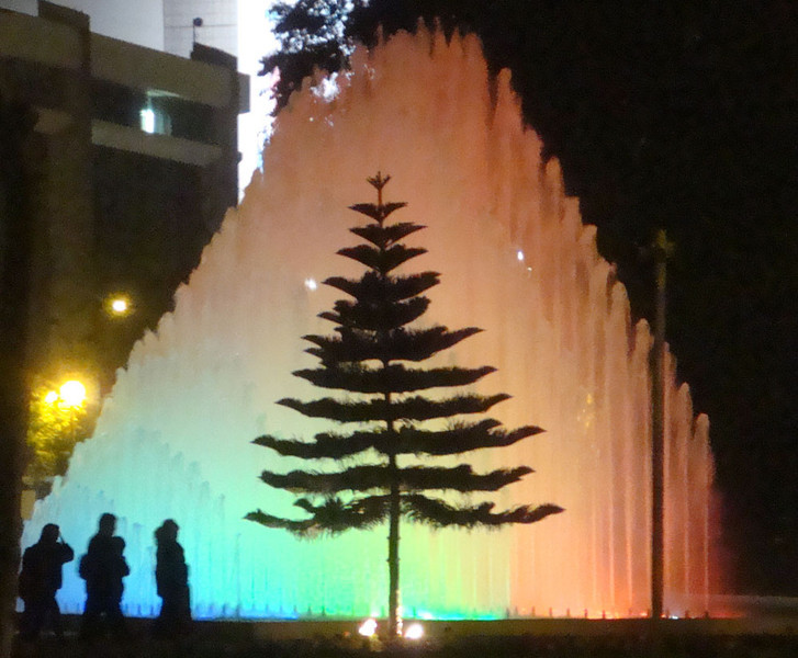 Fountain Park pine tree.jpg