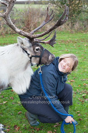 Cairngorm Reindeer tour 2013