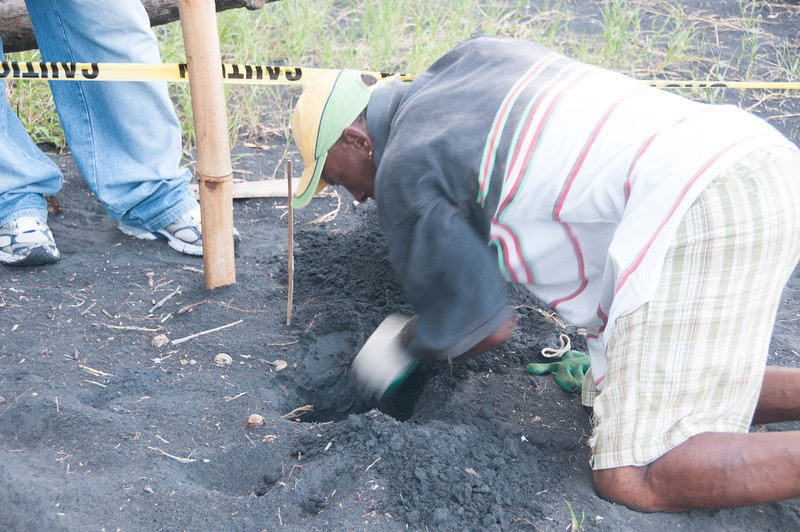 Local digging for turtles on the beach of Dominica