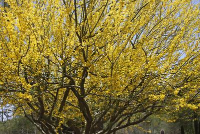 Desert Botanical Garden, Phoenix, Ariz., April 29, 2012