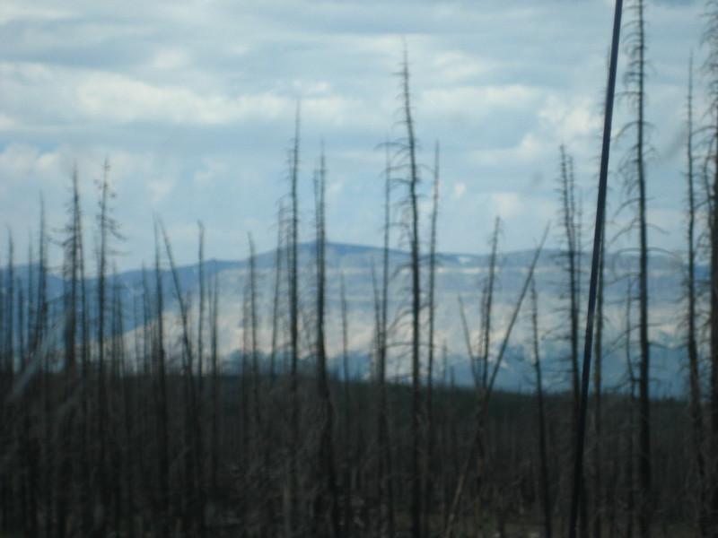 2008-07-24-YOCAMA-Montana_2719.jpg