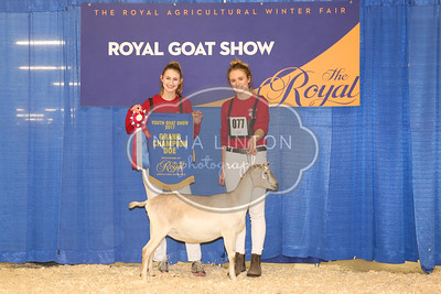 RAWF Youth Goat Show Champions