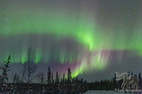 Aurora Borealis~Olnes Pond~3-2021