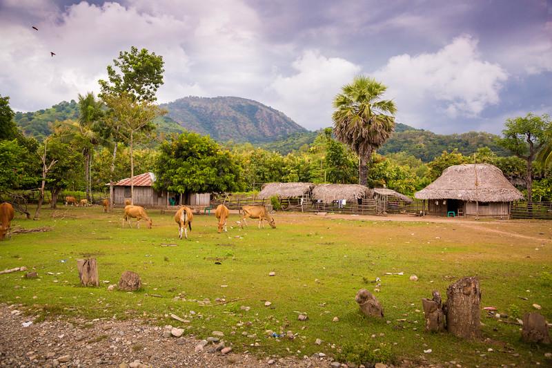 Timor Leste-135.jpg