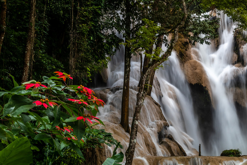 Jungle floral with water