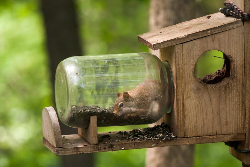 Bottled Squirrel