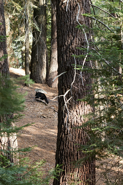 Sequoia_0683.jpg