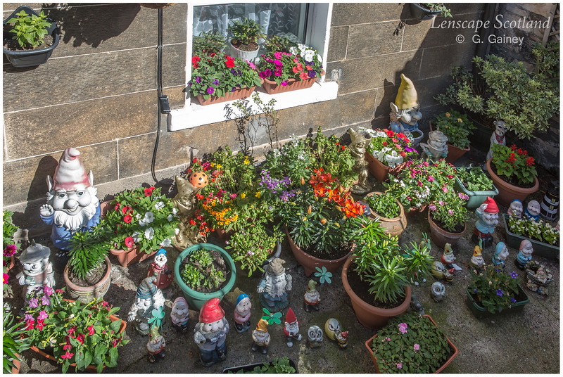 Basement garden with gnomes, Stockbridge