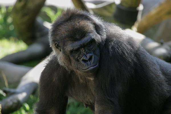 San Diego Zoo & Animal Parc