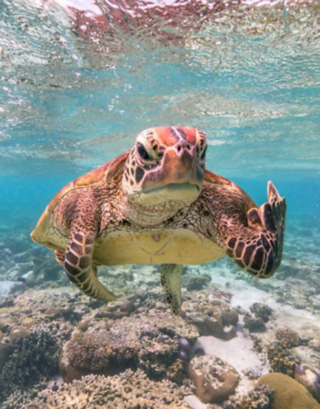 Terry the Turtle wins Comedy Wildlife Photo of the Year!