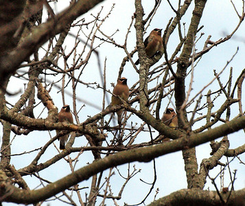 NYC Audubon trip to Brigantine NWR