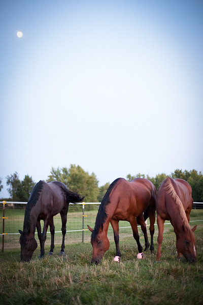 web-Beaver-Family-Portrait-Fulton-MO-Photographer-Outdoor-Horse-6.jpg