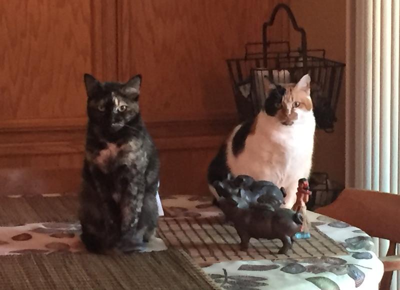 cat conspiracy.jpg