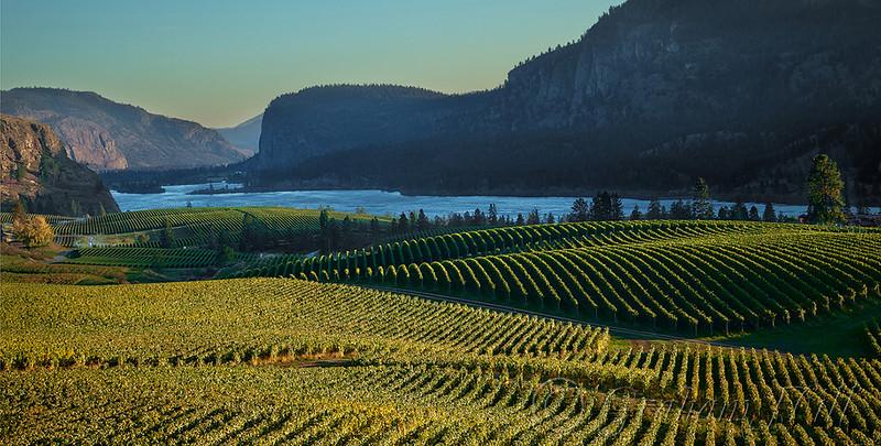 Okanagan - Blue Mountain Winery Sunset.jpg