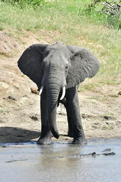 Elephants105.jpg