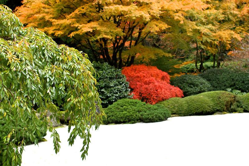Portland Japanese Garden  11-11-11  3534.jpg