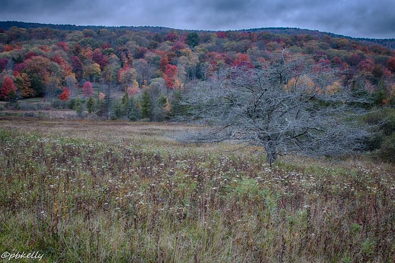 Stylized tree in the meadow.