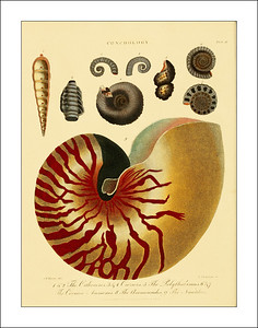Sea Shell Prints