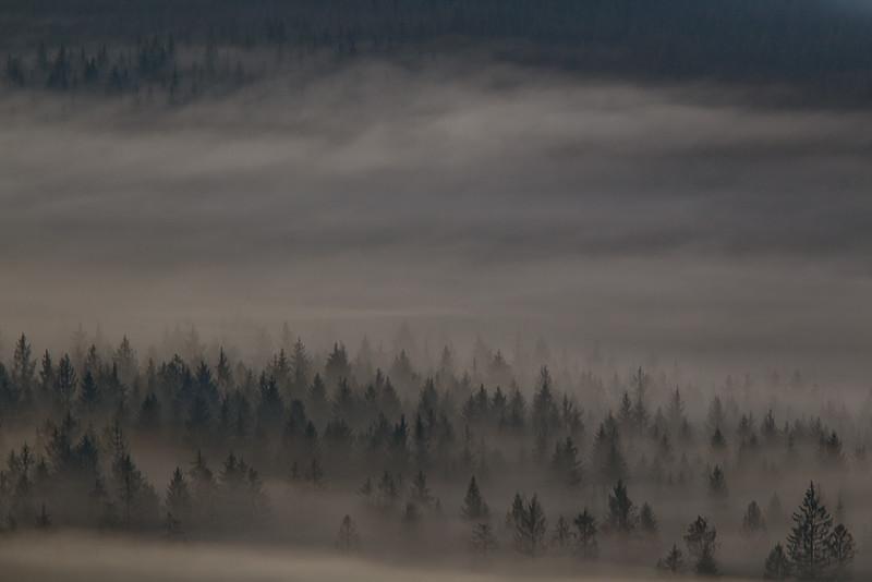 Mglista dolina.jpg