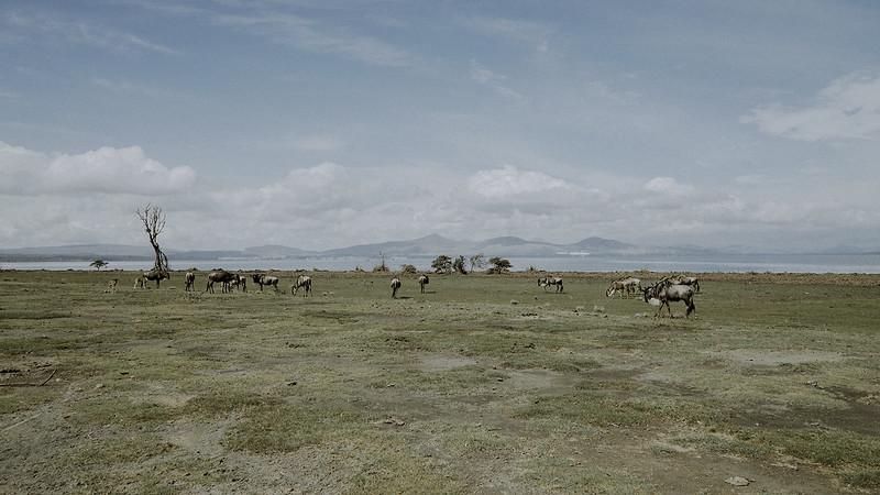 Tu-Nguyen-Destination-Wedding-Photographer-Kenya-Masai-Mara-Elopement-Doris-Sam-89.jpg