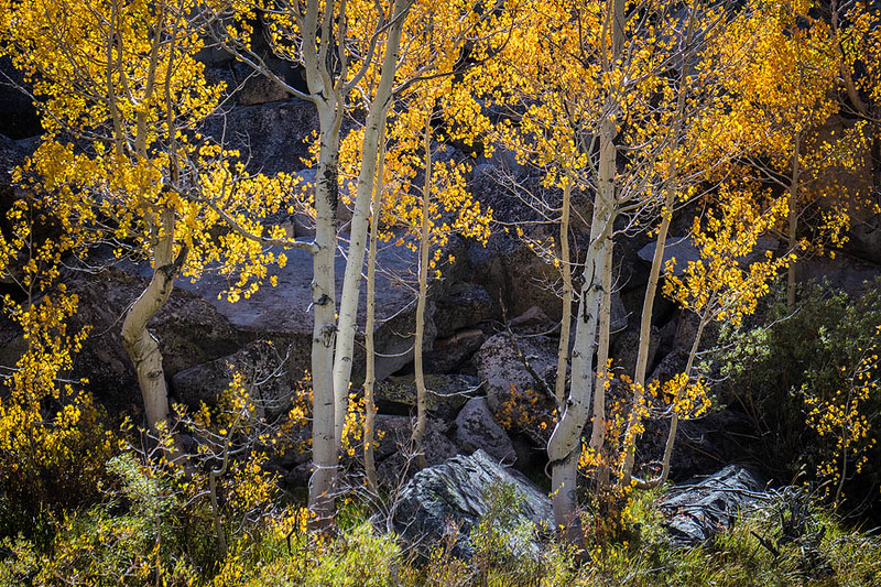 Bishop_Creek_South_Fork_Autumn_MG_3365.jpg