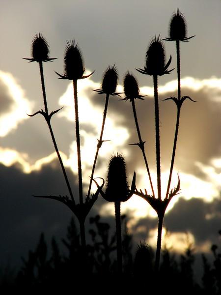 amh FLOWERS (1249).jpg