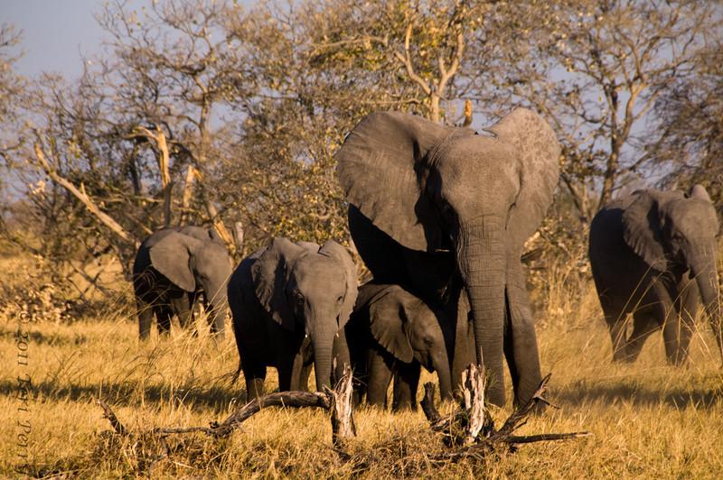 elephants (11).jpg