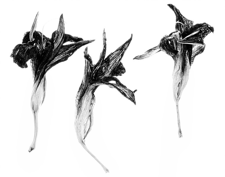 daylilies-03.jpg