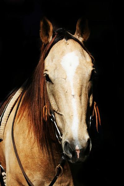 S.Alabama Stock Horse Clinic-Geneva