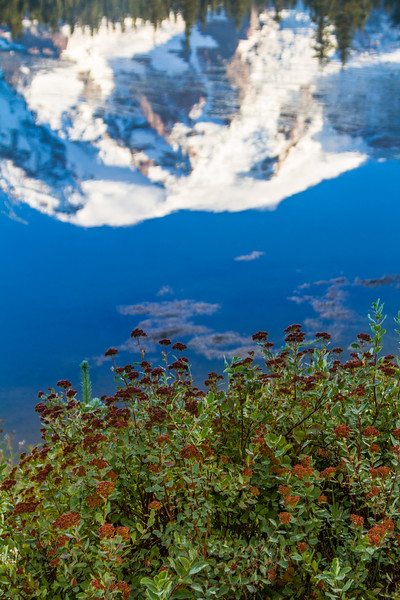 Reflection of Mount Rainier in water - USA