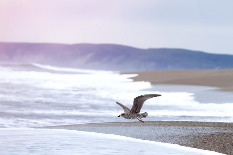 seagul-2.jpg