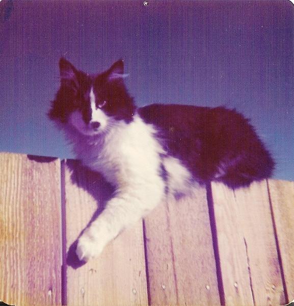 Kitty (11)b.jpg