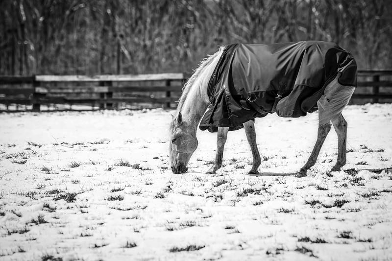 Snow Grazing 3