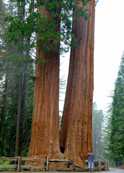 California Day 6 Sequoia 05-30-2017 143.JPG