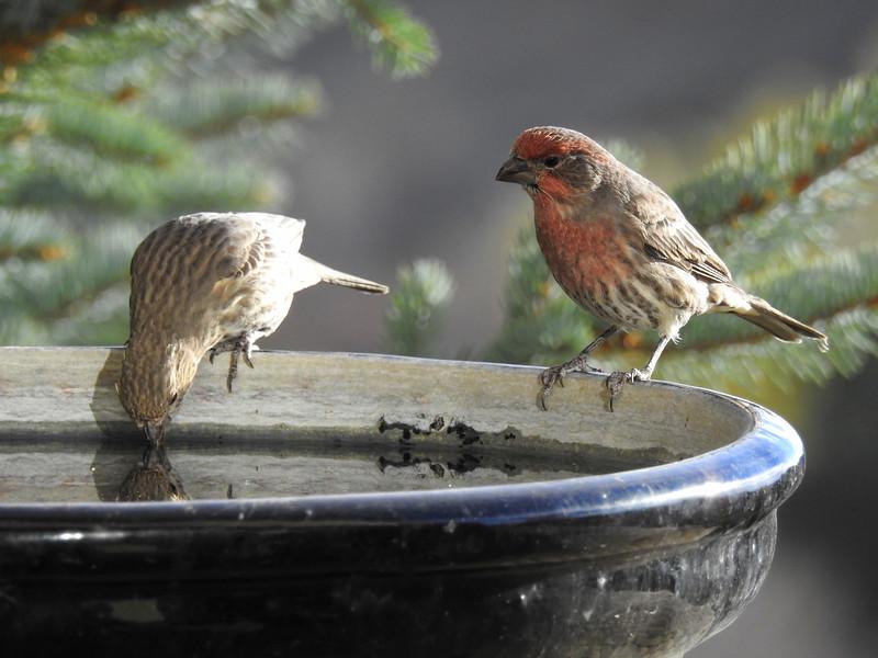 birds (112).JPG