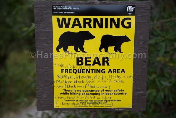 Grand Teton Bears