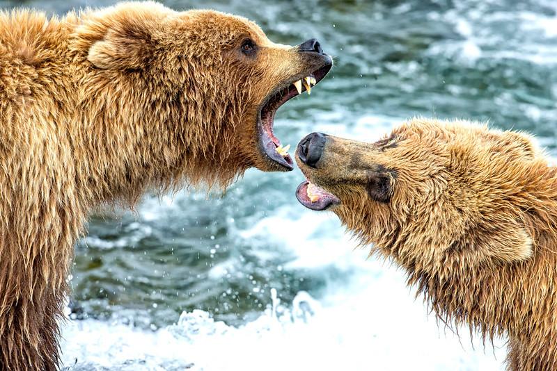 Alaska_2013FH0T8620.jpg