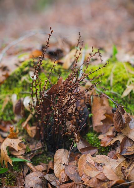woods hike set 2 - 33.jpg