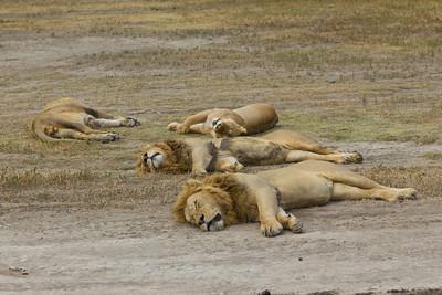 Kenya and Tanzania Safaris