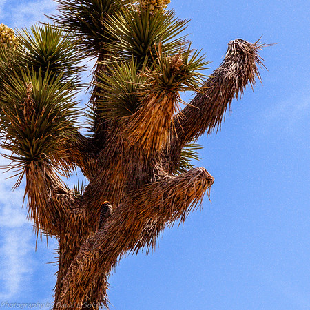Joshua Tree National Park Collection