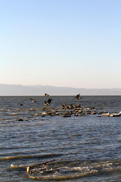 04 The Salton sea (58).JPG
