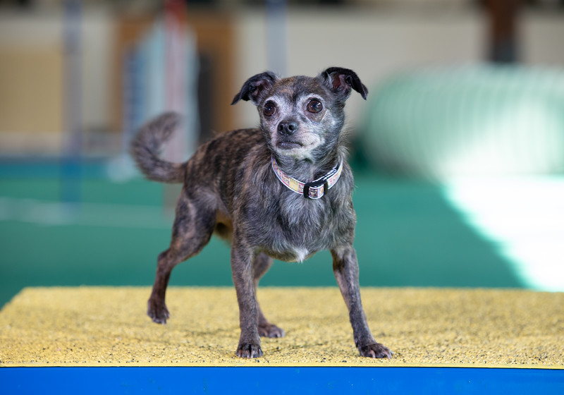 SPCA_Agility-112.jpg