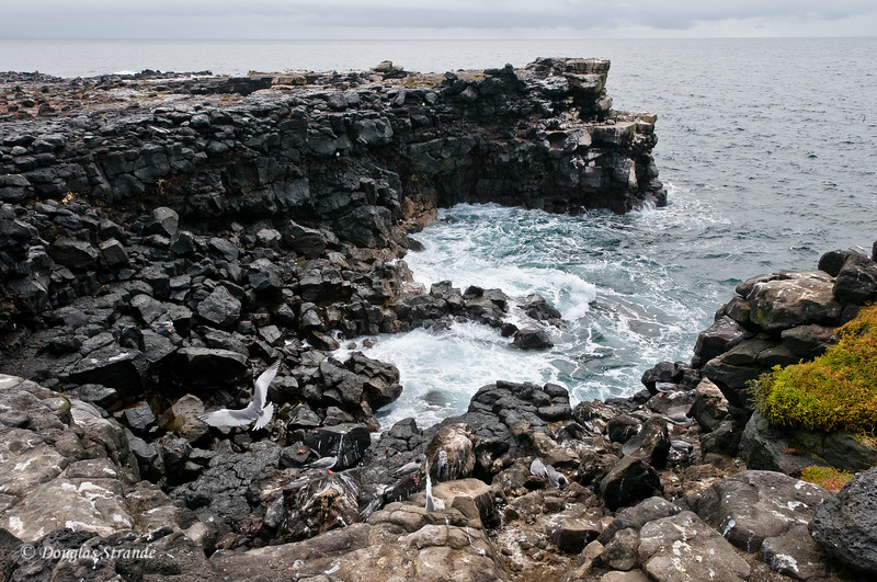 Rugged cliffs of South Plaza Island