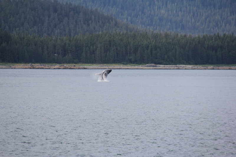 20160717-068 - WEX-Breaching Whale.JPG