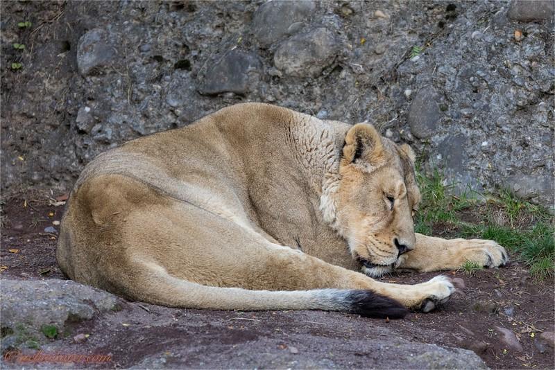 Fotoausflug Zoo + Flughafen - 2015-09-24 - 0U5A2834.jpg