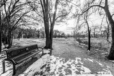 Winter Black & Whites