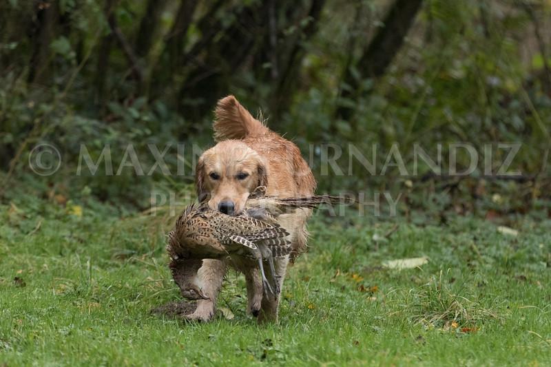 Dogs-4689.jpg